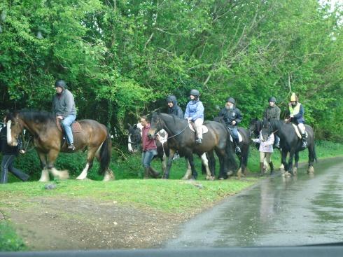 Horses in Devon
